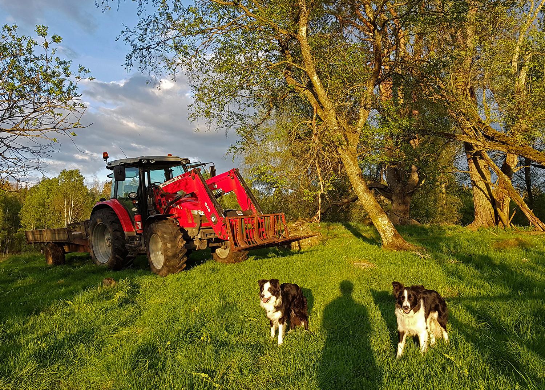 TraktorHund