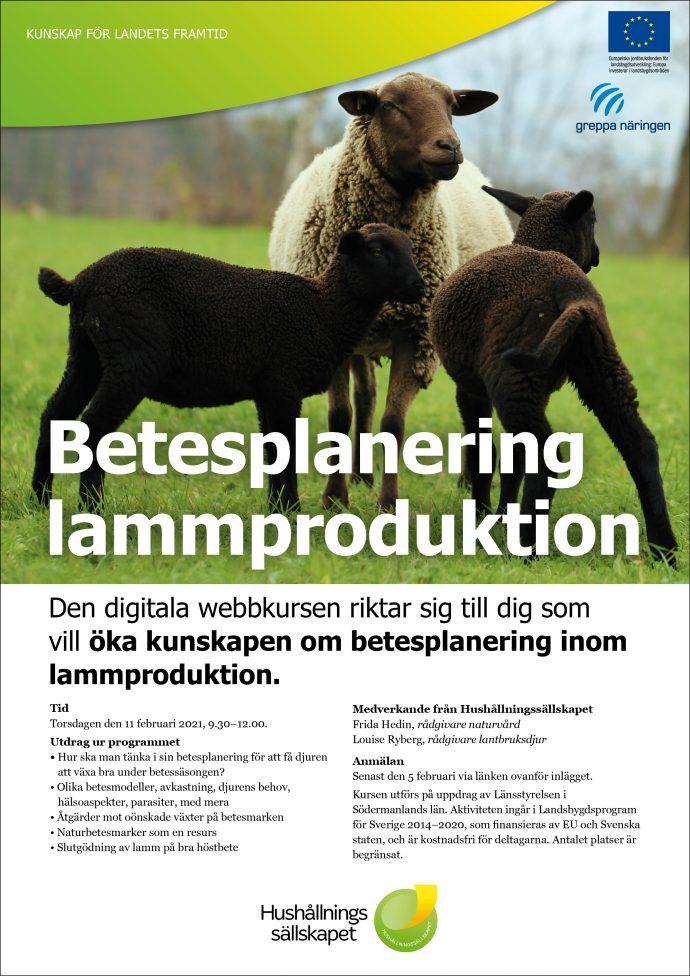 betesplanering-lamm-1-690x976
