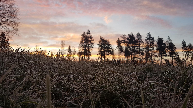 frostnatt2