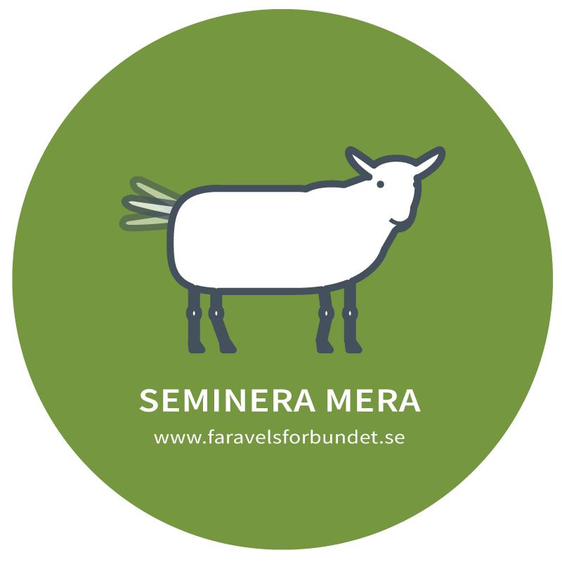 semineramera
